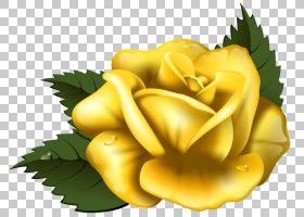 玫瑰艺术,装饰,花园玫瑰,玫瑰秩序,花瓣,玫瑰家族,花,灌木,红色,