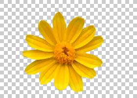 玫瑰花瓣,金盏花,雏菊家庭,向日葵,颜色,郁金香,玫瑰,牛眼雏菊,花