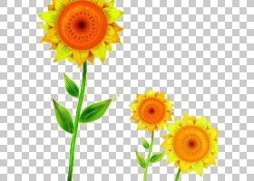 族的图形,非洲菊,黄色,雏菊家庭,花瓣,向日葵,葵花籽,绘图,花,向