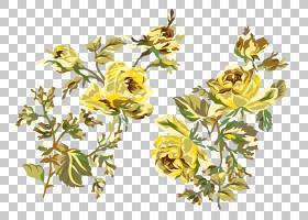 玫瑰金花,草药,植物茎,分支,传粉者,草药,植物群,玫瑰,兆字节,植