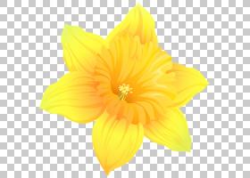 花卉植物,马兜铃(Hippeastrum),花粉,野花,草本植物,阿米利斯族(A