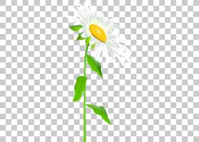 花卉植物,黛西,雏菊家庭,黄色,花瓣,蒲公英,向日葵,植物群,植物,