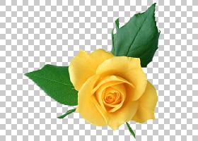 花卉剪贴画背景,floribunda,玫瑰秩序,玫瑰家族,植物,红色,切花,