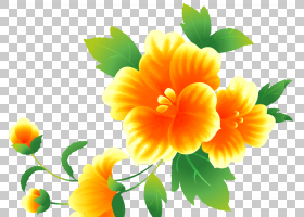 花卉剪贴画背景,草本植物,一年生植物,金盏花,雏菊家庭,黄色,花瓣