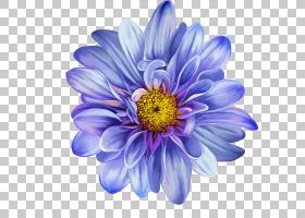 蓝色水彩花,草本植物,一年生植物,大丽花,紫罗兰,切花,玛格丽特黛