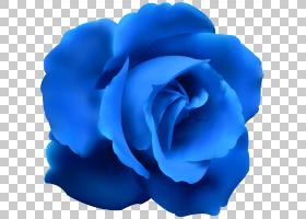花卉剪贴画背景,floribunda,切花,植物,玫瑰秩序,玫瑰家族,花园玫