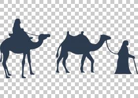 双峰驼家畜,阿拉伯骆驼,骆驼状哺乳动物,家畜,骆驼,干燥剂,剪影,