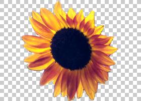 红花,花瓣,向日葵,关门,向日葵,计算机图形学,雏菊家庭,红向日葵,