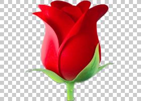 花卉剪贴画背景,百合家族,玫瑰秩序,草本植物,红掌,玫瑰家族,植物