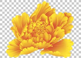 金花,非洲菊,金盏花,雏菊家庭,花瓣,花粉,计算机软件,绿色,花,红