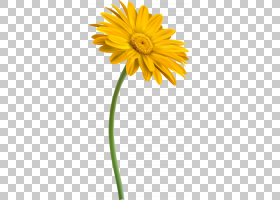 花卉剪贴画背景,非洲菊,植物茎,雏菊家庭,黛西,蒲公英,向日葵,葵