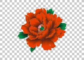 花卉剪贴画背景,非洲菊,橙色,切花,插花,花卉设计,雏菊家庭,花卉,