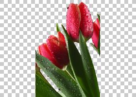 粉红色花卡通,芽,植物茎,草本植物,百合家族,花瓣,植物,像素,深红