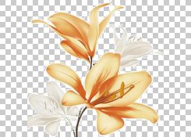 白百合,莉莉,橙色,植物茎,花瓣,桃子,植物,切花,花,红色,粉红色,