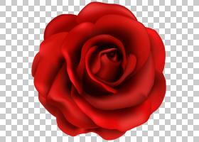爱玫瑰花,多年生植物,爱,人造花,山茶花,日本山茶,中国玫瑰,切花,