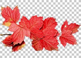 秋叶背景,葡萄叶,多年生植物,[医]维本(Viburnum),平面,落叶,枫树