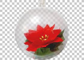 圣诞灯泡圣诞球圣诞泡泡,一品红,装饰,圣诞装饰,圣诞装饰品,植物,