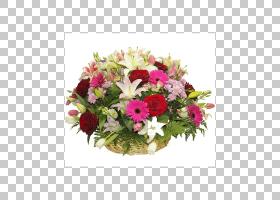 粉红色花卉背景,粉红色家庭,一年生植物,插花,切花,非洲菊,人造花