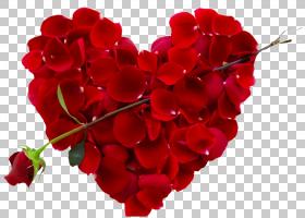 婚恋背景,玫瑰家族,花束,粉红色家庭,一年生植物,花园玫瑰,心,花