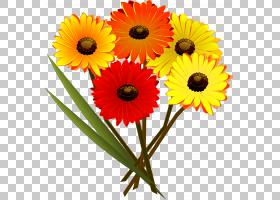 婚礼贺卡鲜花,非洲菊,橙色,切花,花卉设计,雏菊家庭,金盏花,花卉,