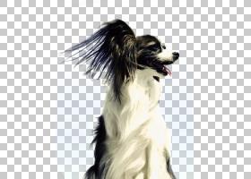 卡通狗,口吻,乳突,伴侣犬,狗,球,取,播放,皮带,咀嚼,西班牙猎犬,图片