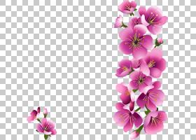 春花,樱花,洋红色,插花,紫罗兰,分支,草本植物,一年生植物,切花,