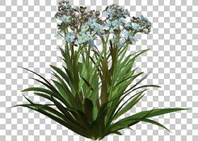花卉剪贴画背景,草,树,叶,室内植物,花园,切花,拼贴,百合,蝎子草,