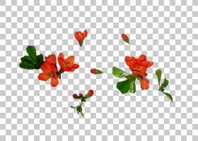 花卉剪贴画背景,草本植物,开花,植物群,电邮,植物,花卉设计,切花,