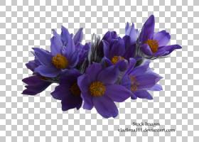 花卉剪贴画背景,草本植物,紫罗兰,番红花,海葵,花瓣,植物,烟树,紫