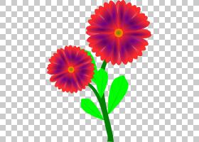 花卉剪贴画背景,草本植物,非洲菊,洋红色,大丽花,切花,一年生植物