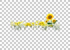 花卉剪贴画背景,黛西,线路,插花,花瓣,雏菊家庭,花卉,黄色,草,文