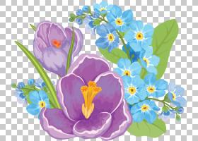 族的图形,种子植物,番红花,紫罗兰家族,蓝帽,花瓣,植物,紫罗兰,CD