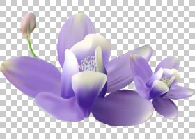 花卉颜料,花瓣,植物,薰衣草,紫色,丁香,紫罗兰,花,油漆,海报,房间