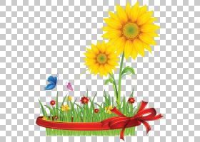 族的图形,野花,花卉设计,雏菊家庭,花卉,花瓣,植物,向日葵,非洲菊