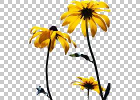 族的图形,黛西,雏菊家庭,黄色,向日葵,植物群,葵花籽,销,植物,绘