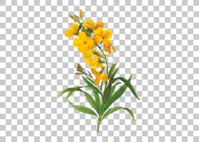 水彩花卉背景,花瓣,石斛,壁花,兰花,植物茎,切花,植物,黄色,水彩