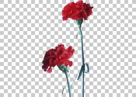 春花,花卉设计,粉红色家庭,洋红色,植物茎,切花,草本植物,一年生