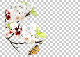 春花,花卉设计,细枝,花瓣,分支,飞蛾与蝴蝶,植物群,昆虫,传粉者,