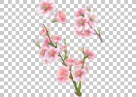 春花,细枝,花卉设计,蛾兰,切花,春天,花瓣,植物,分支,粉红色,开花