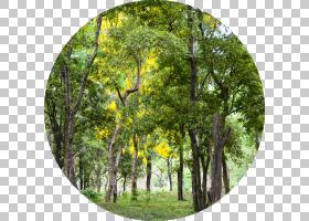 卡通自然背景,丛林,雨林,分支,自然保护区,落叶,老生长林,林地,生
