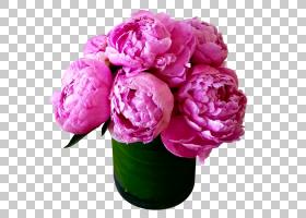 粉红色花卉背景,粉红色家庭,洋红色,蔷薇,植物,粉红色,玫瑰,月季,