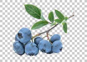 派卡通,修剪,亚里士多德(Aristotelia Chilensis),蓝莓茶,杜松浆
