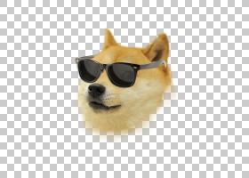 狗狗,眼镜,眼镜,口吻,博美拉尼亚,太阳镜,小狗,狗,瘸子,互联网模