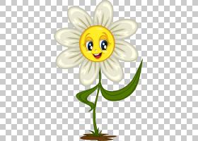 黑白花,仙女,黛西,蜜蜂,传粉者,黑白,昆虫,笑脸,植物,表情,微笑,