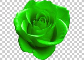 黑白花,植物,切花,花瓣,玫瑰秩序,花,玫瑰家族,花园玫瑰,蓝色,颜