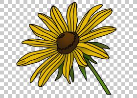 黑白花,黑白,线路,牛眼雏菊,植物茎,黛西,雏菊家庭,黄色,切花,花