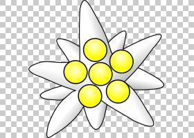 黑白花,黑白,线路,黄色,圆,花瓣,面积,对称性,植物群,点,纹身,花