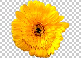 黑白花,黑白,非洲菊,葵花籽,橙色,雏菊家庭,金盏花,花瓣,向日葵,