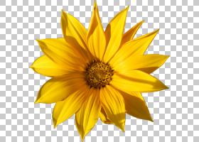 黑白花,黑白,黄色,向日葵,植物,雏菊家庭,Pinterest,玛格丽塔,葵