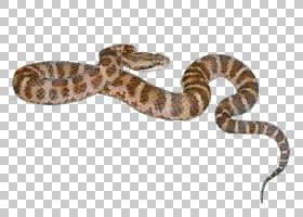 蛇卡通,博阿斯,毒蛇,缩放的爬行动物,猪鼻蛇,毒蛇,爬行动物,Elaph